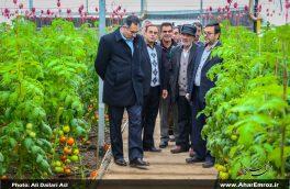 تصویری/ بازدید فرماندار شهرستان اهر از مراکز تولید محصولات کشاورزی