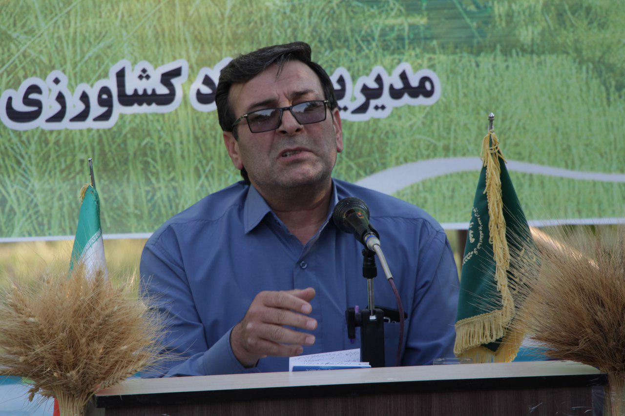 کاهش برداشت گندم در اراضی زارعی اهر/ کشاورزان و کارشناسان جهاد کشاورزی در مبارزه با «آفت سِن گندم» موفق عمل کردند