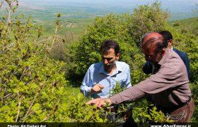 اعتبار مورد نیاز برای مبارزه با آفت «پروانه دُم قهوهای» تامین میشود/ حساسیت فعالان محیط زیست و فضای مجازی در رابطه با حفظ جنگلها قابل احترام است/ مبارزه با آفت «پروانه دُم قهوهای» با محلول شیمیایی نبود